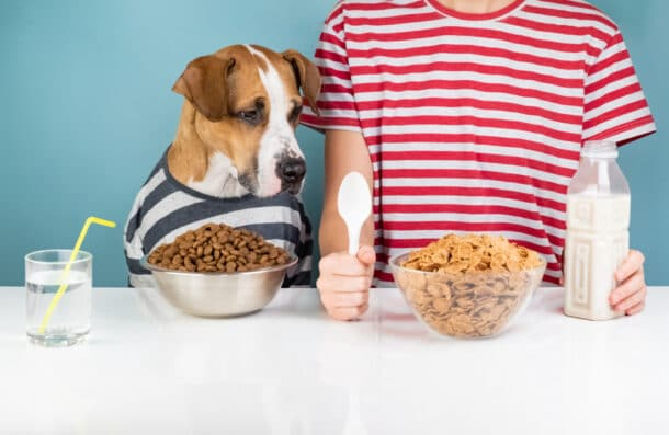 A dog looking at its owner's cereal bowl.