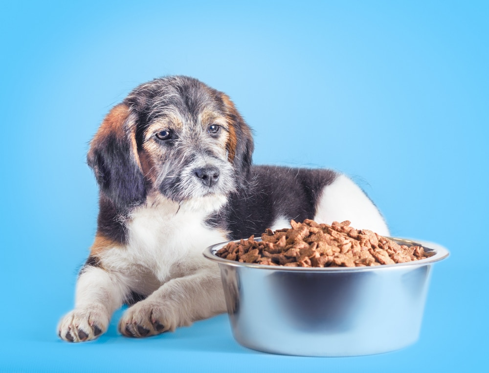 A dog sitting next to a bowl with too much food in it.