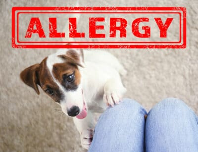 A picture of a dog with the word allergy written on it.