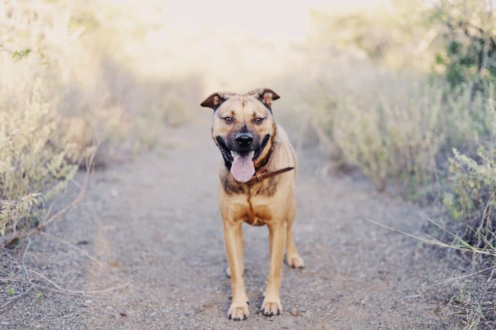 dog breathing heavy featured image