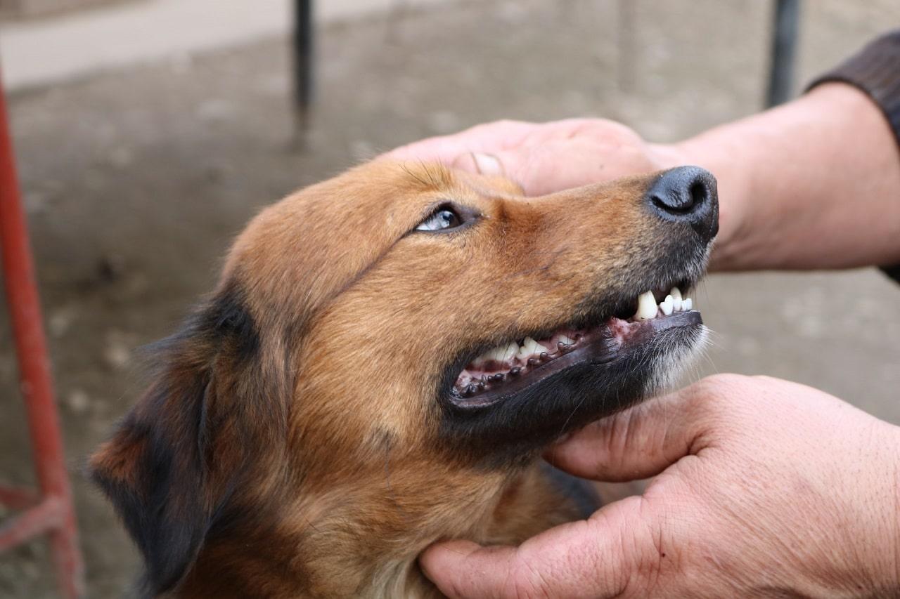dog teeth checking