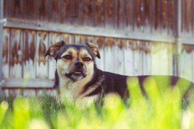 dog underbite be fixed featured image
