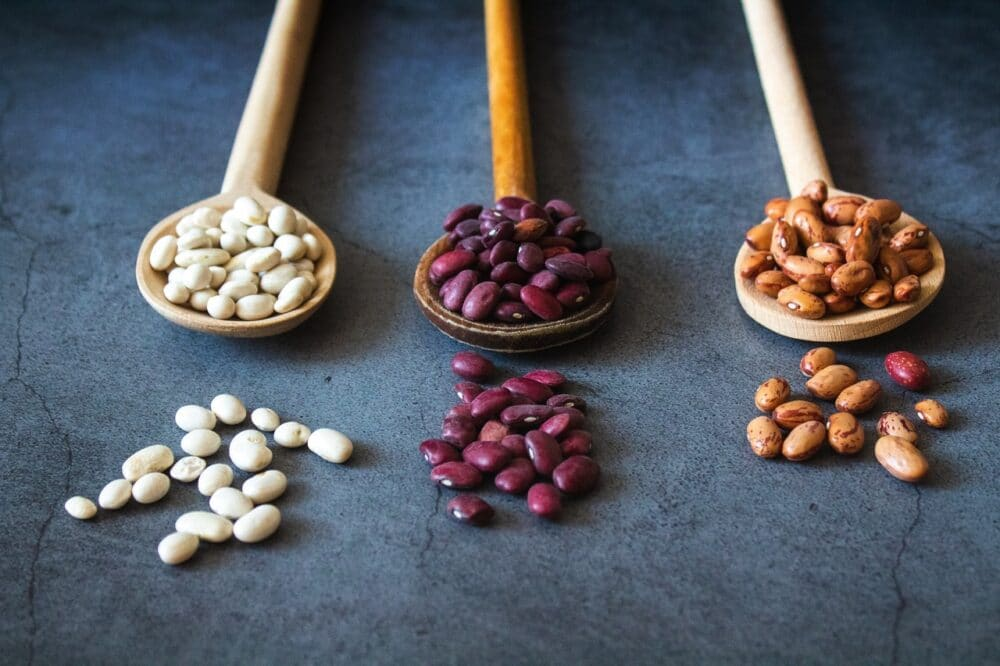 dogs eat beans safely featured image
