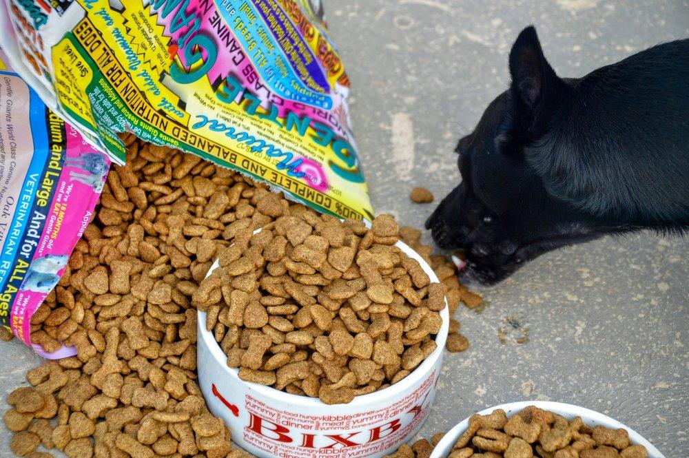 Dog eating Gentle Giant