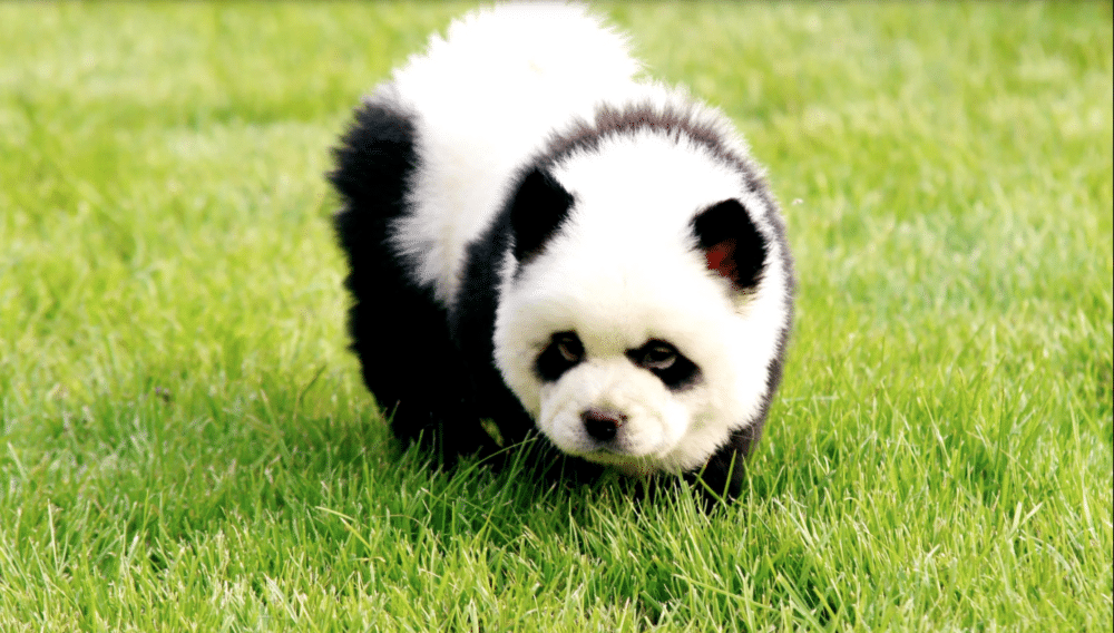 Hsin Ch'en in grass