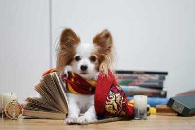 A a cute dog with piles of Harry Potter books on the background