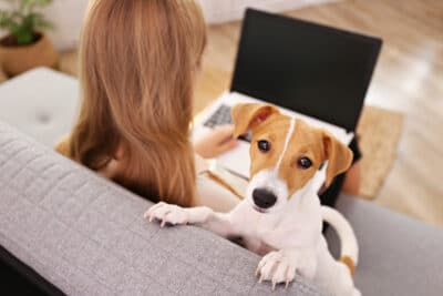 Close up shot of young woman with her jack russell terrier puppy