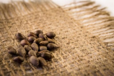 Apple seeds on hemp fabric background