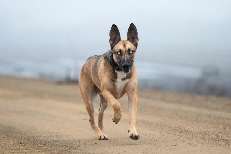 Belusky running on gravel