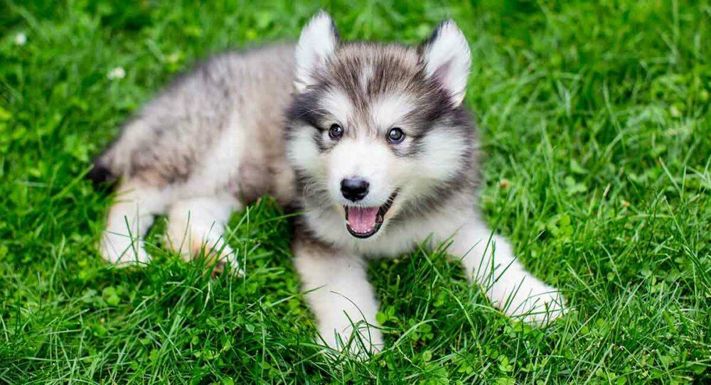 Photo: The Happy Puppy Site