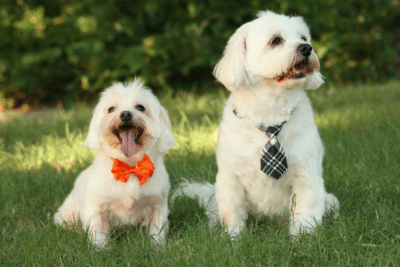 2 dogs sitting in grass