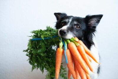 dog eating carrots