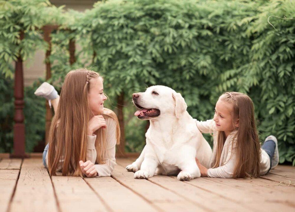 Labrador Retriever Dog Breed Family, Social Life, Physical Traits, Diet Information